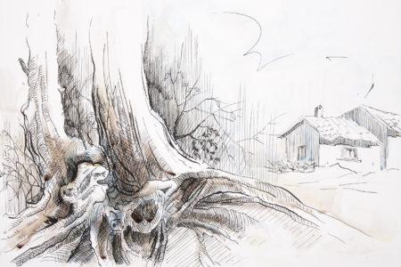 Acquerello albero